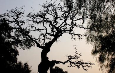 Chinese Garden Show 1 - 095